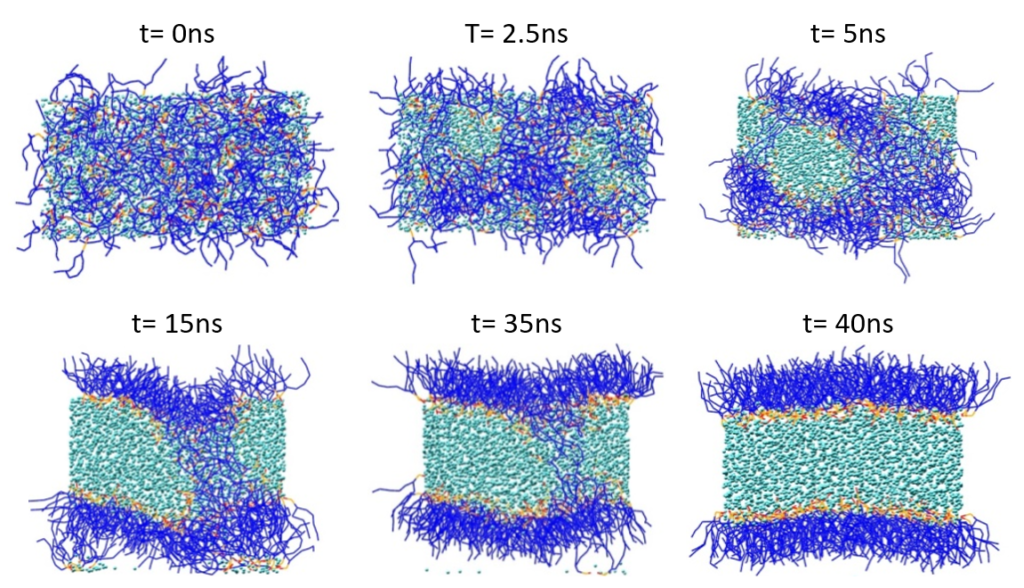 Figure 2: Spontaneous phospholipid bilayer formation. Lipid tails are shown in blue, and lipid polar head groups in red and orange. Water (P4) particles are displayed in cyan.
