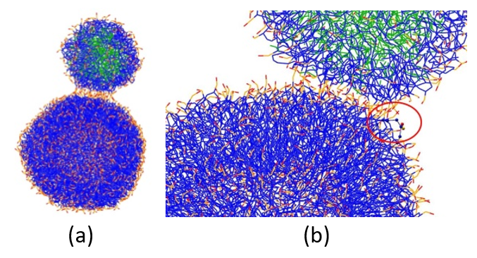 Figure 4: (a) Initial configuration of PFOB-NEP and phospholipid vesicle. (b) Re-orientation of lipid molecules leading to stalk formation. The lipid tail (in blue) of one of the vesicle molecules gets exposed (red circle). Lipid polar head groups are in red and orange, and PFOB molecules are in green.